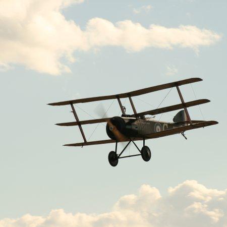 Soptripe 022 Fly